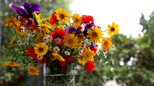 Картинки на рабочий стол лето полевые цветы