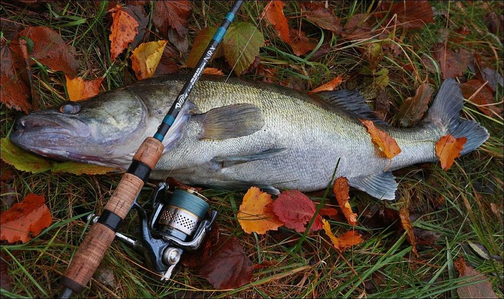 закон о ловле рыбы на спиннинг