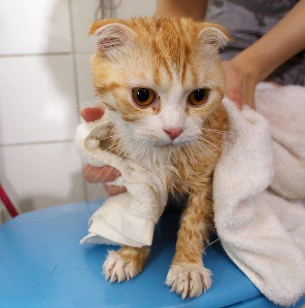 Как мыть котенка в домашних условиях - Opalubka-new.ru