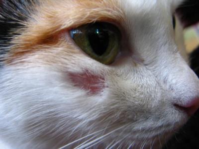 Болезни передающиеся от кота