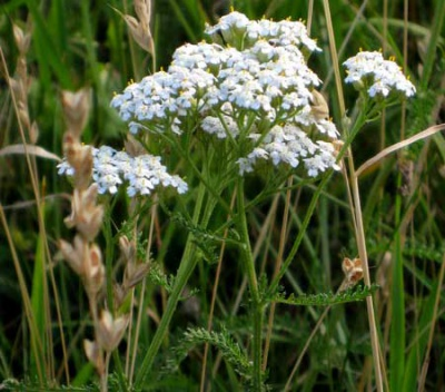 Магические лекарственные травы
